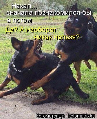 kotomatritsa_V (335x411, 186Kb)