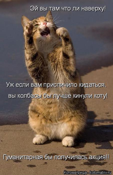 kotomatritsa_w (452x700, 303Kb)