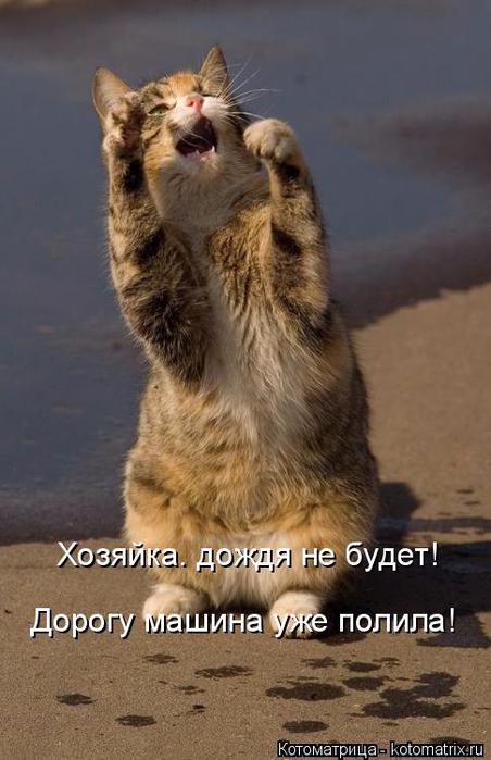 kotomatritsa_wf (452x700, 280Kb)