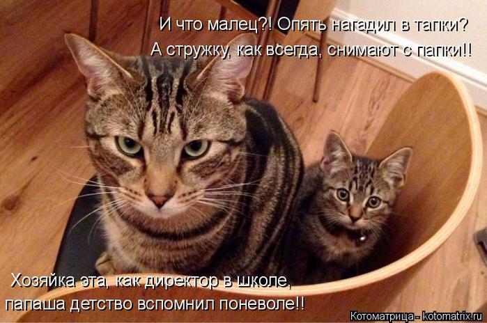 kotomatritsa_ze (700x464, 386Kb)