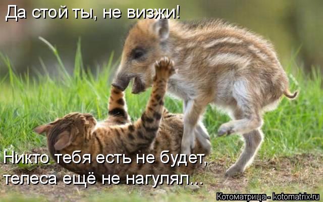 kotomatritsa_Zy (640x400, 238Kb)