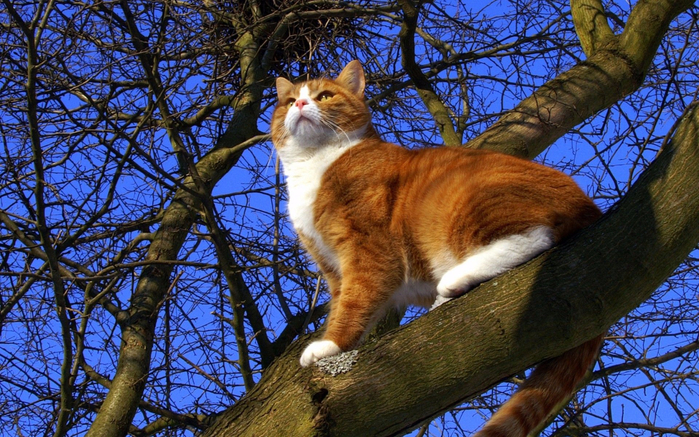 Cat-trees-branches_1920x1200 (700x437, 519Kb)