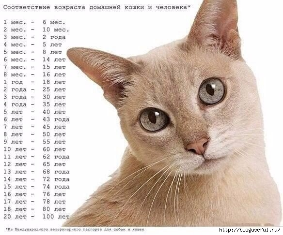 возраст кошек и собак (584x486, 138Kb)