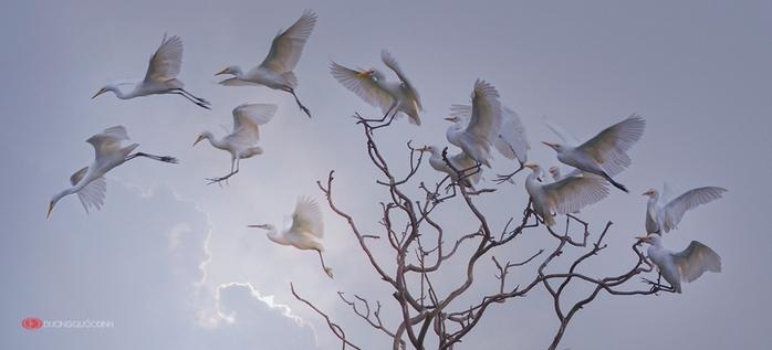 3303834_birds_1 (700x317, 112Kb)