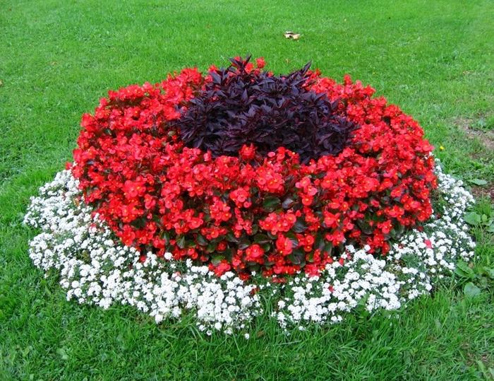 Какие цветы садить на одну клумбу названия и фото
