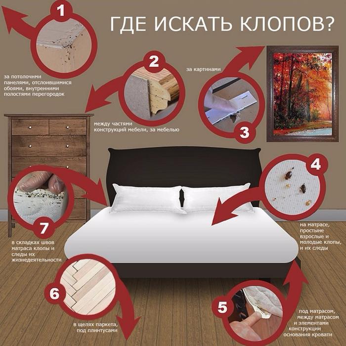 info_kak-vyvesti-postelnyh-klopov (700x700, 450Kb)
