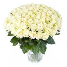 101-rose-white-min-min (222x222, 39Kb)
