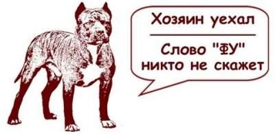 1471426318_sobaki4 (400x195, 13Kb)