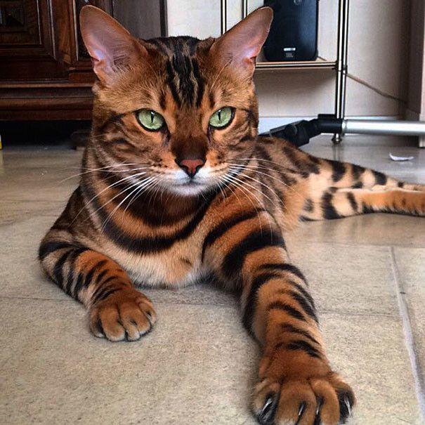 ���/2045074_beautiful_cat_fur_01 (605x605, 79Kb)