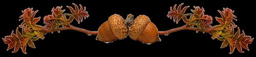 жолуди (500x112, 73Kb)