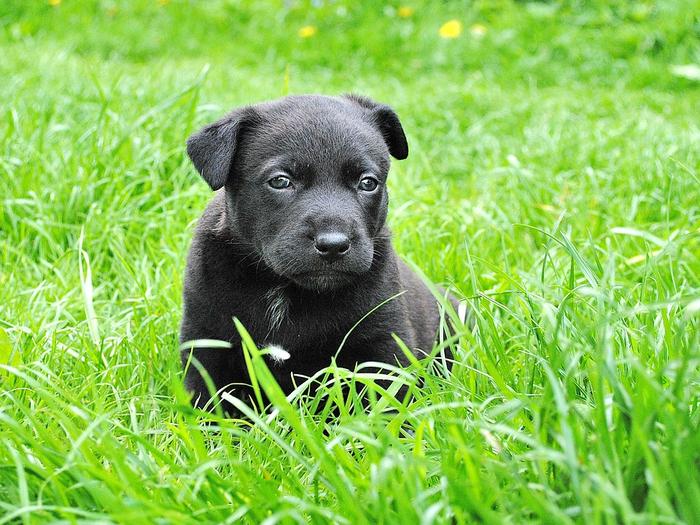 dog-279698_960_720[1] (700x525, 537Kb)