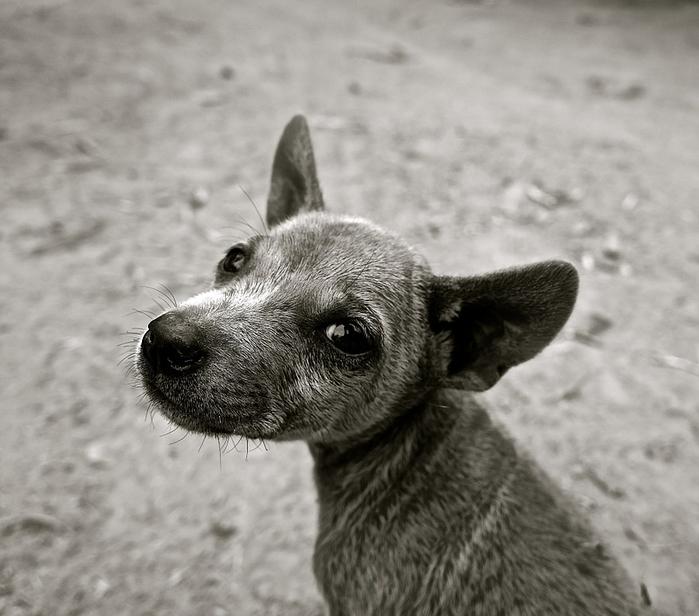 dog-589002_960_720[1] (700x616, 264Kb)