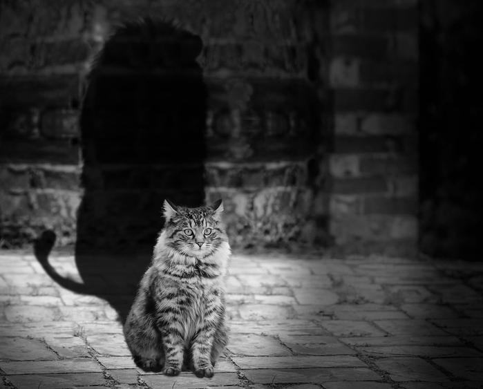 cat-564202_960_720[1] (700x563, 159Kb)