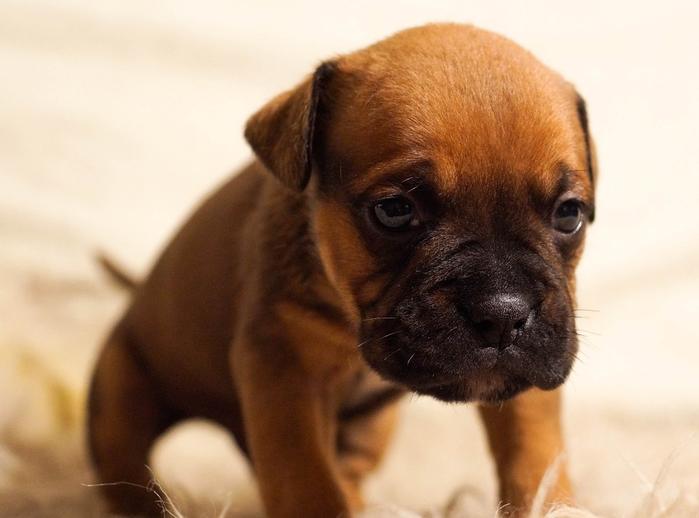 puppy-384647_960_720[1] (700x518, 271Kb)