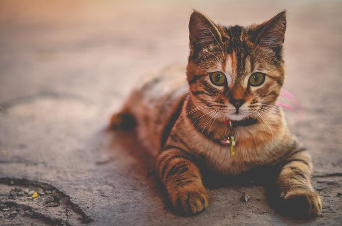 cat-1245673_960_720[1] (700x463, 256Kb)