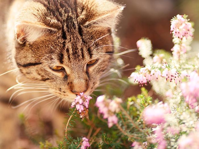 cat-1187281_960_720[1] (700x525, 453Kb)