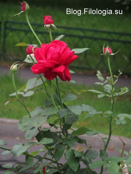 3241858_flowers02 (525x700, 53Kb)