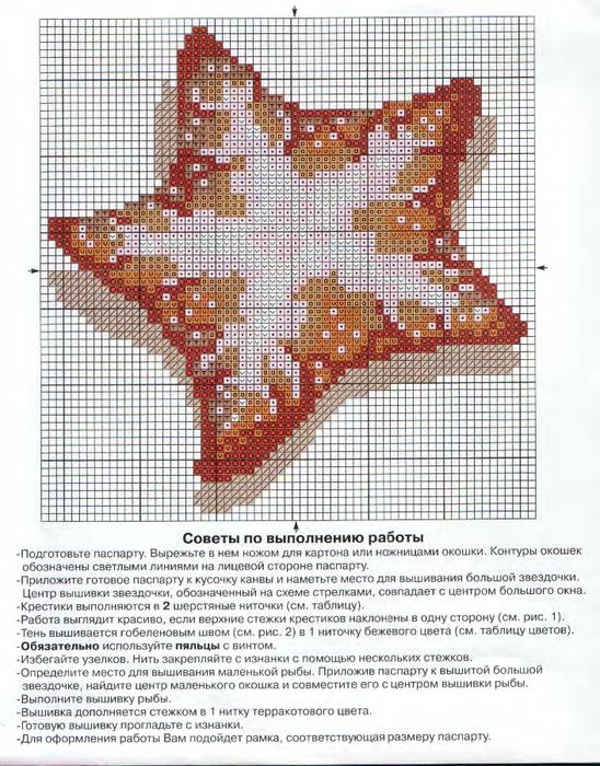 Морская-звезда-1 (548x700, 615Kb)