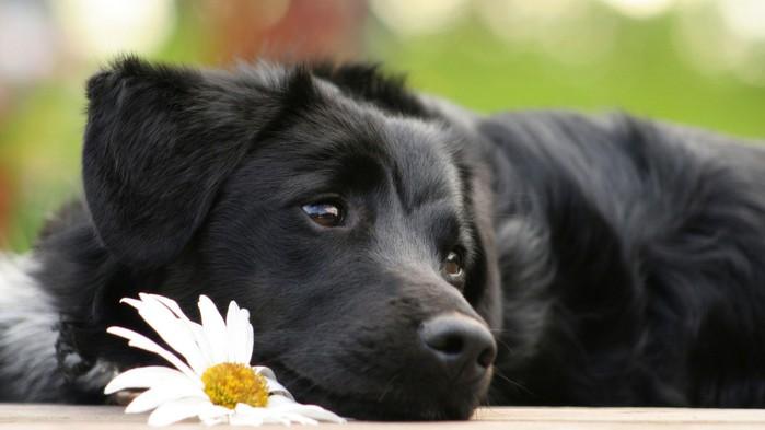 собака на пост (400x393, 50Kb)