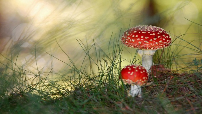 Лучше оставить в лису! 10 видов ядовитых грибов (фото)