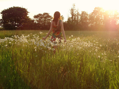 daisies-flowers-girl-grass-light-Favim.com-131499 (500x374, 150Kb)