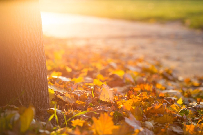 fall-autumn-leaves-on-the-ground-picjumbo-com (700x466, 298Kb)