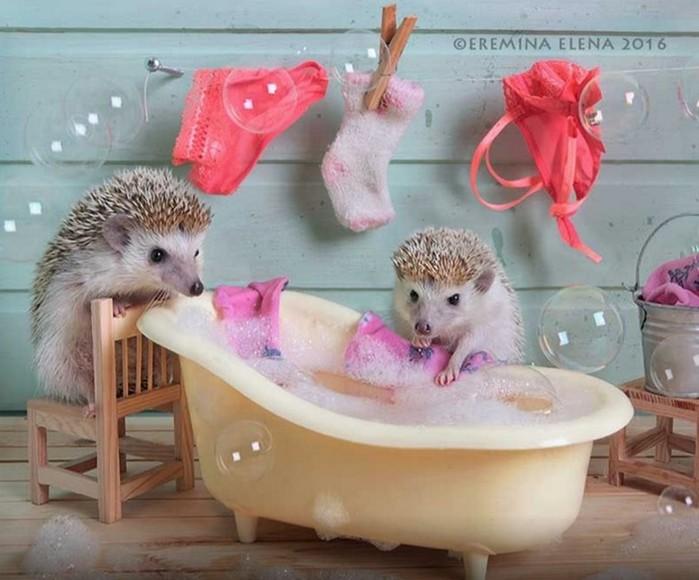 Фотограф Елена Ерёмина: забавная жизнь маленьких ёжиков