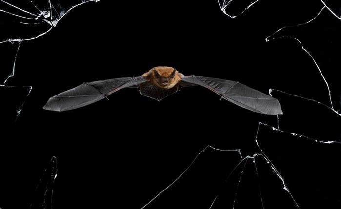 Лучшие фото дикой природы этого года — конкурс Музея естествознания (Лондон)