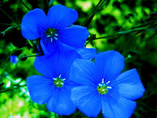 395091__blue-spring-for-cica_t (229x172, 14Kb)