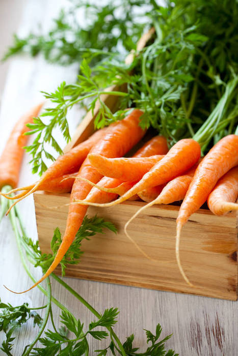 Целительные свойства моркови (4) (467x700, 68Kb)