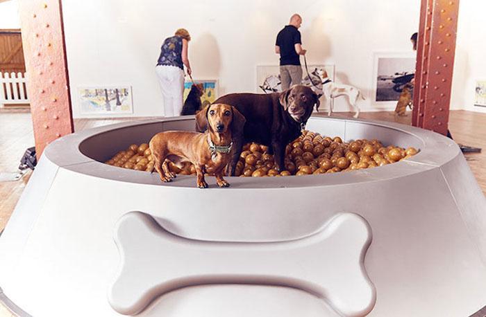 искусство для собак 2 (700x458, 183Kb)