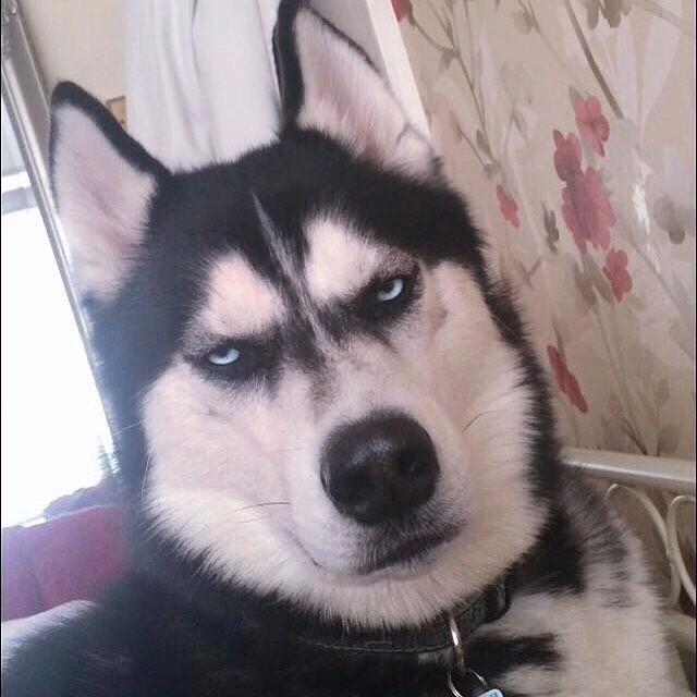 угрюмый пес ануко фото 3 (640x640, 243Kb)