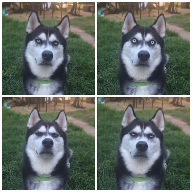 угрюмый пес ануко фото 8 (640x640, 358Kb)