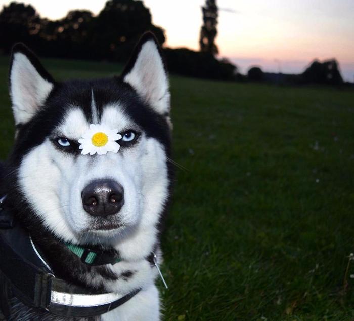 угрюмый пес ануко фото 11 (700x634, 339Kb)