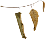 ������ jojo_autumn_forest_elementt_22 (600x522, 178Kb)