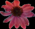 ������ jojo_autumn_forest_elementt_48 (366x308, 202Kb)