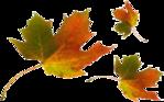 ������ jojo_autumn_forest_elementt_65 (350x219, 85Kb)
