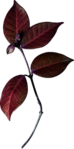 ������ jojo_autumn_forest_elementt_85 (298x600, 171Kb)