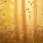 ������ jojo_autumn_forest_paper_12 (700x700, 278Kb)