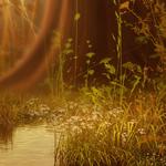 ������ jojo_autumn_forest_paper_15 (700x700, 489Kb)