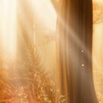 ������ jojo_autumn_forest_paper_18 (700x700, 269Kb)