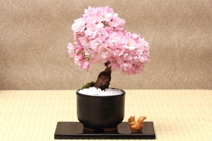 Детальная инструкция по выращиванию бонсая (фото, видео)