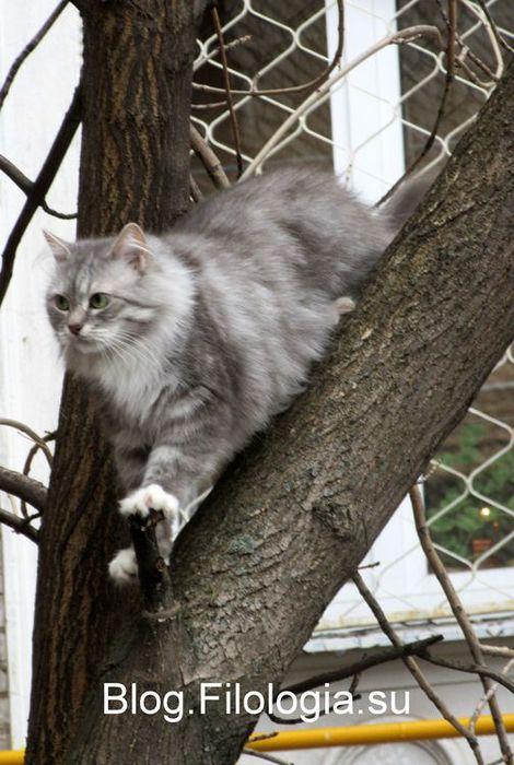 3241858_cats01 (470x700, 69Kb)
