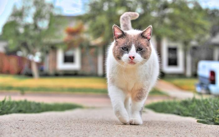 Как правильно ухаживать за котёнком, которого взяли с улицы