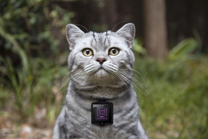 Whiskas-Catstacam.@750 (700x466, 80Kb)