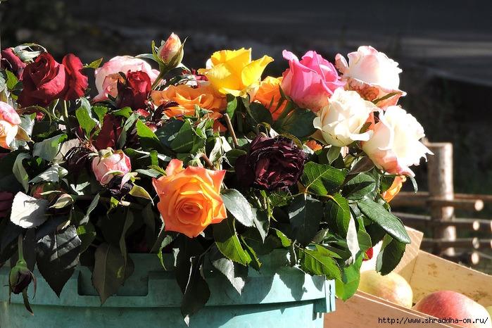 осенние розы (700x466, 296Kb)