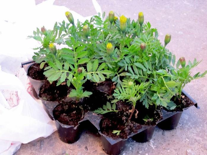Как правильно сажать луковичные растения «под зиму»