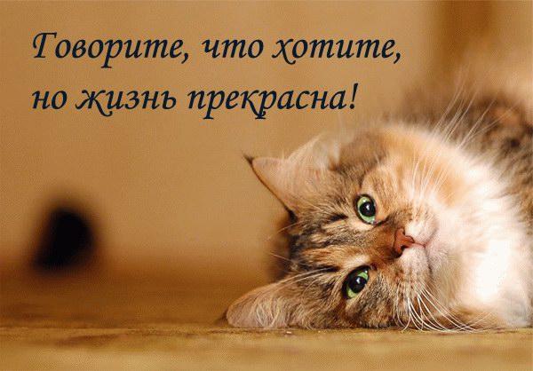 Stixi_koteiko.ru_7 (600x418, 59Kb)
