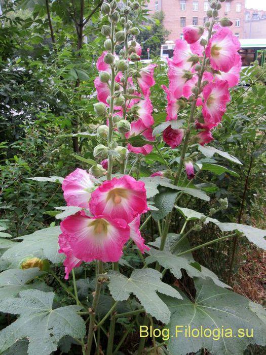 3241858_flowers01 (525x700, 101Kb)