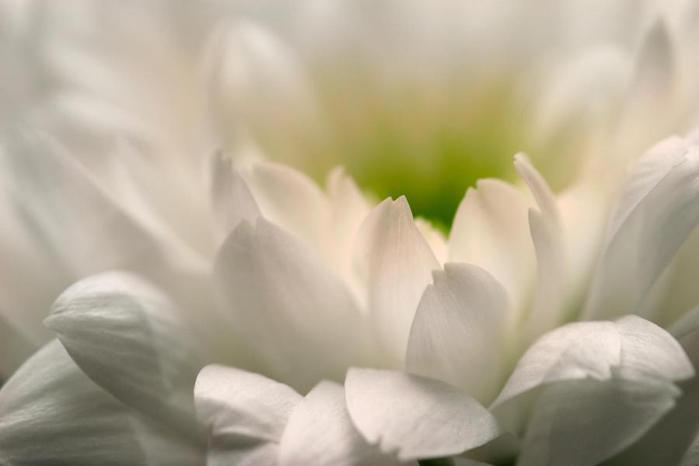 ах.fond_ecran_fleur_02 (700x466, 18Kb)